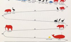 infographic50_animal