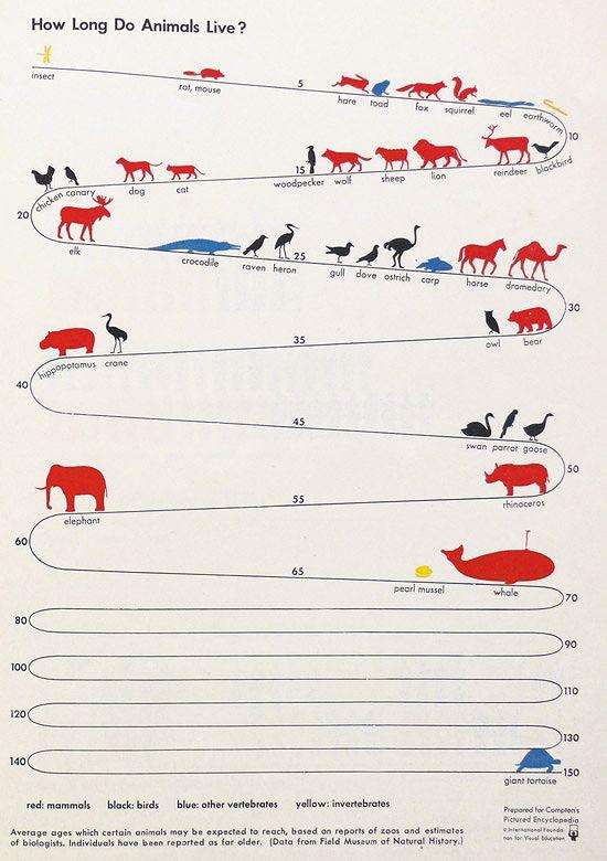インフォグラフィック:動物40種の寿命、ゾウガメは約150年。進化の過程で消えた不老不死