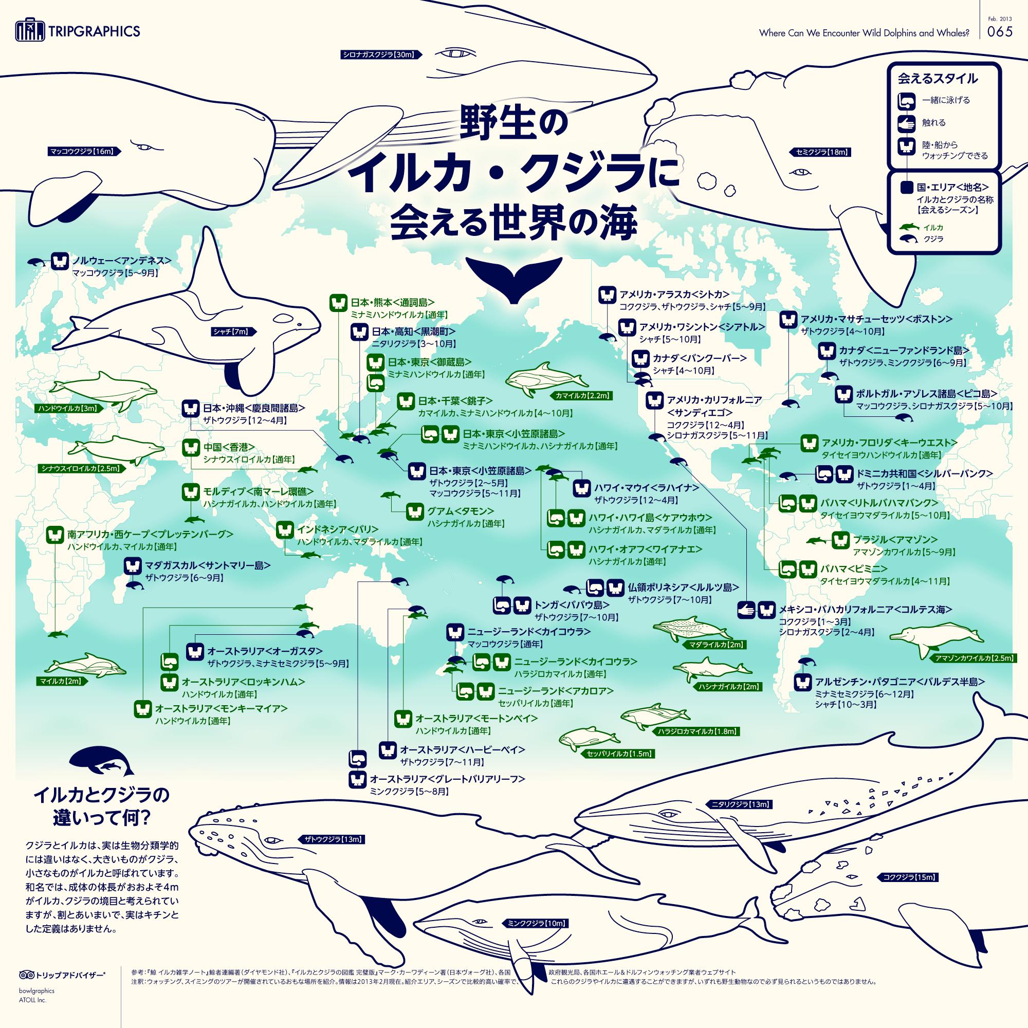 インフォグラフィック:イルカやクジラと泳げるスポット一覧。海の感動をあたなにも