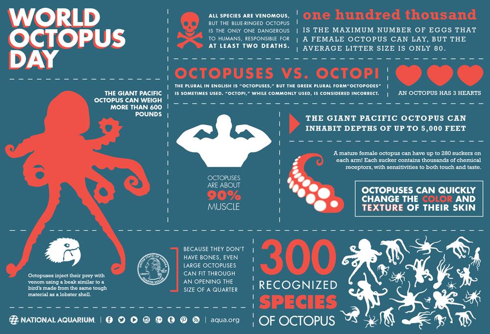 海外で「悪魔の魚」と嫌われるタコ!不思議な生態とその理由を表すインフォグラフィック