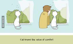 猫と一緒に住むと起こる生活の変化