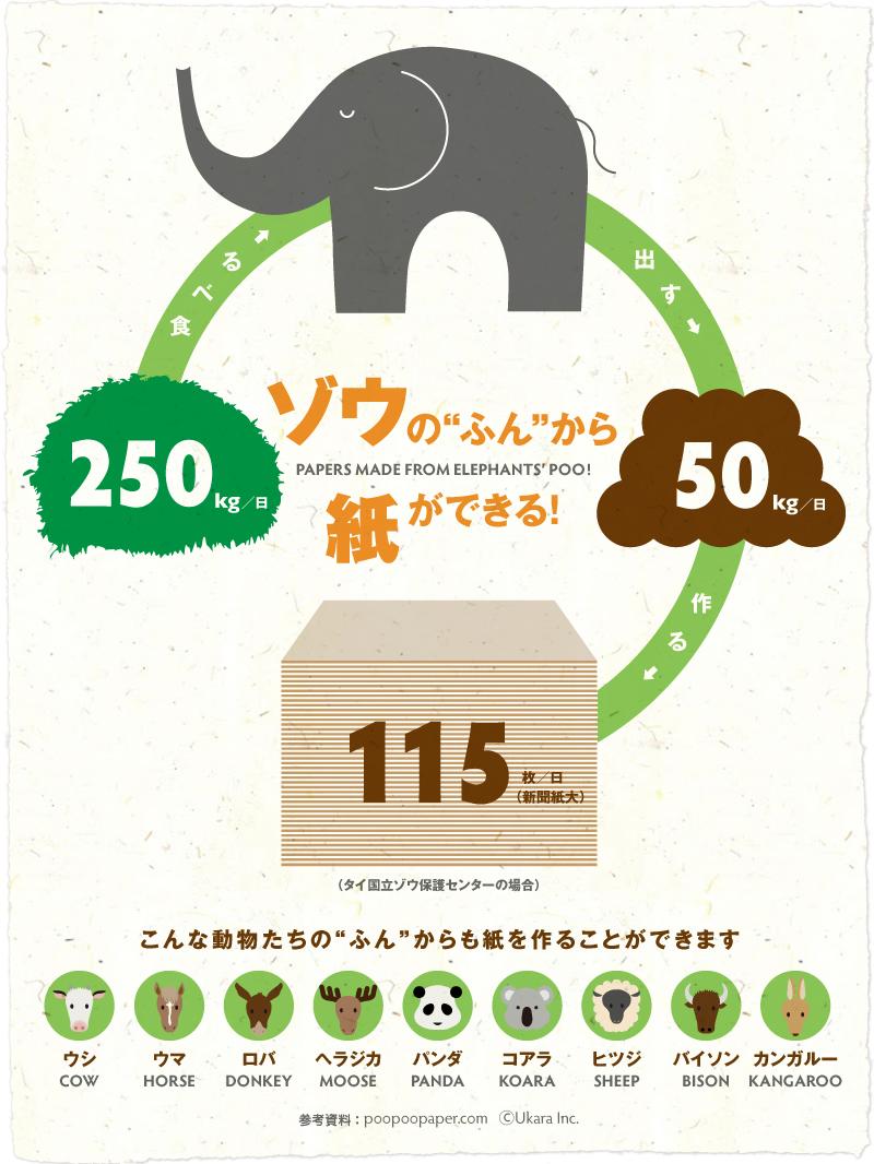 インフォグラフィック:ゾウ1日分の糞から、新聞紙(A2)115枚の再生紙ができる