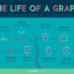 数ヶ月から、数年かかるワイン造り