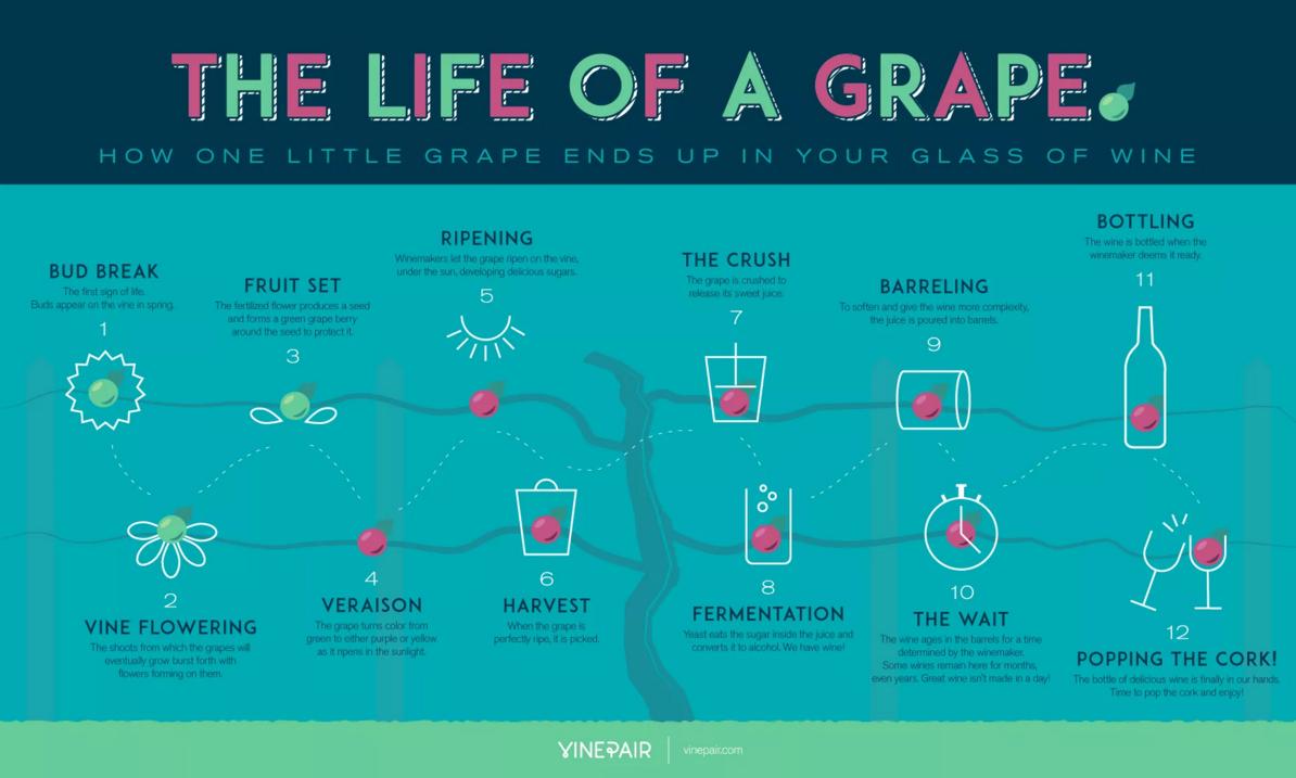 インフォグラフィック:赤、白、ロゼワインの作り方。ブドウからワインができるまで