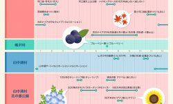 富士山を彩る花々の年間スケジュール
